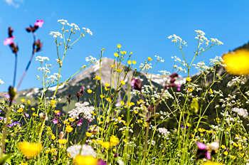 Kruidenreizen in zuid Tirol